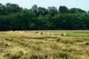 La Valle del Ronco-Bidente dà vita all'Osservatorio locale per il paesaggio